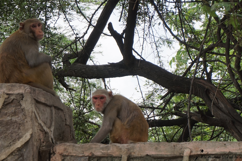 Benvenue en Inde, Singes New Delhi