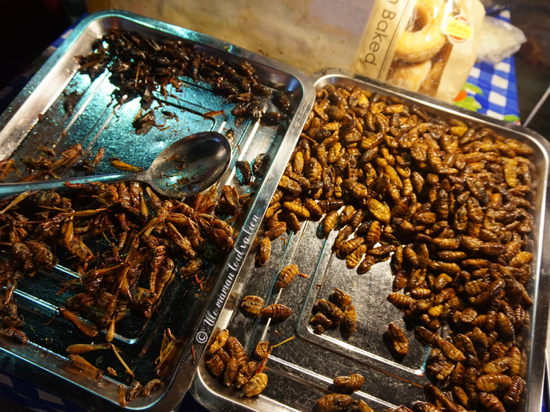 chiang mai experiences insects