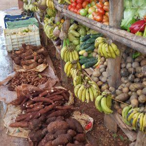 côte nord république dominicaine fruits